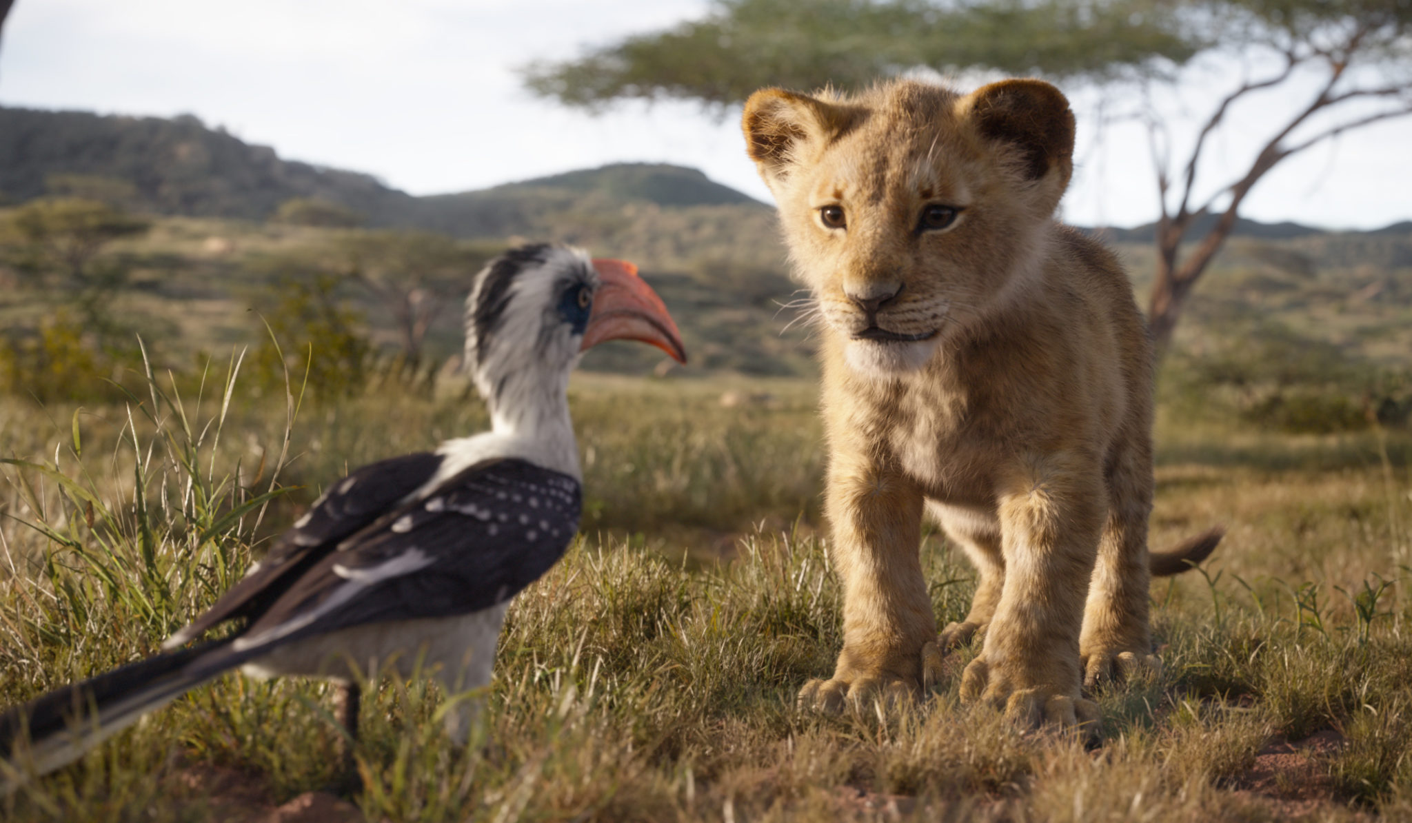 【無雷】最擬真《獅子王》完美重現童年回憶 「開頭場景」直接讓人起雞皮疙瘩