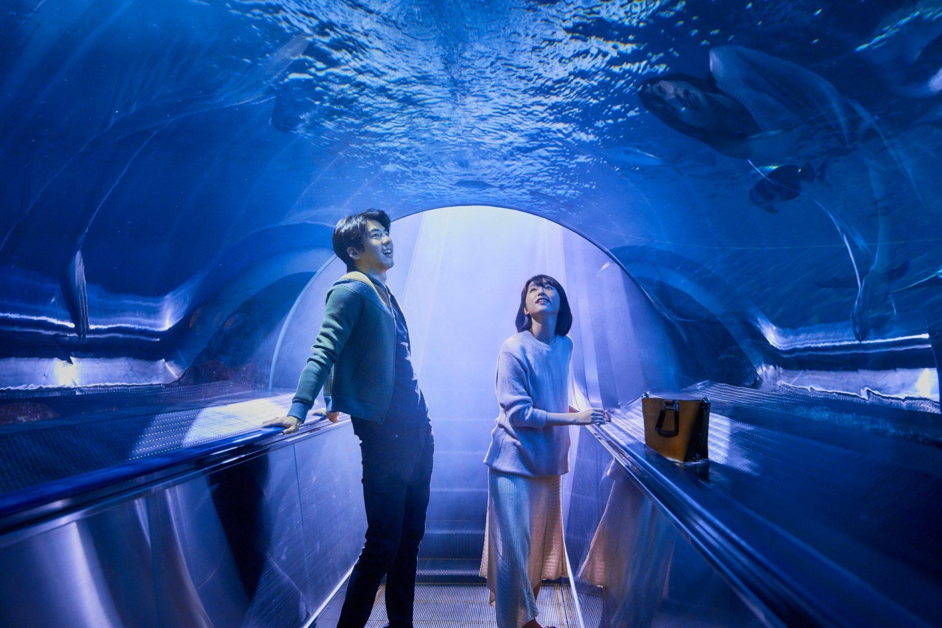 《你的情歌》傅孟柏、柯佳嬿海中約會超浪漫 曖昧戲幕後卻超狼狽悲劇