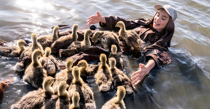 《迷雁返家路》關鍵時刻注入一劑強心針 歐洲稀有候鳥意外現身宜蘭的秘密