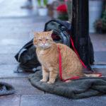 再見街貓BOB