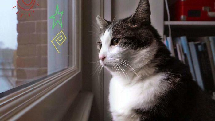 98yp 最愛喵星人:我貓威武 線上看